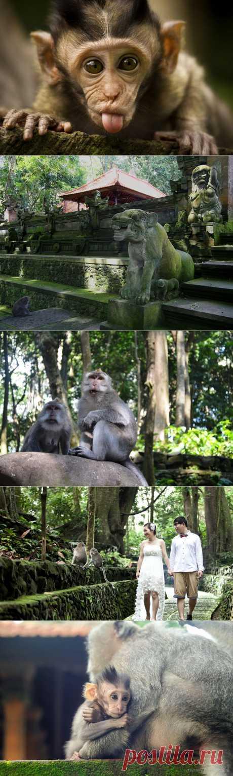 Лес обезьян: столько милых мордашек Вы еще не видели (остров Бали) - Terra-Z