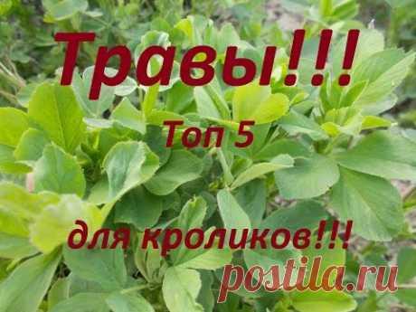 Какие травы любят кролики ??? Мой, рейтинг (ТОП5) ,луговых трав для кроликов!!!
