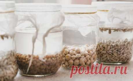 13 легких способов ускорить прорастание семян   Удобрения и стимуляторы (Огород.ru)
