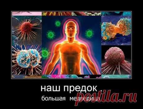 Родионова(Золотарёва)Валентина - 79 тыс. картинок - Поиск Mail.Ru