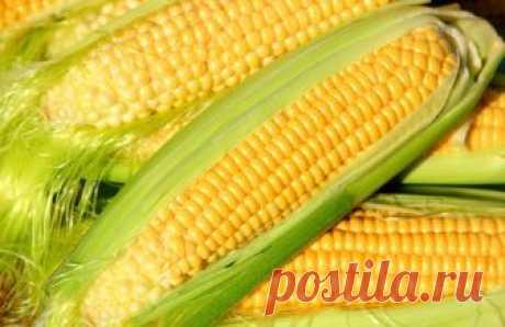 Как правильно сварить кукурузу: самые важные советы Какую кукурузу стоит выбрать, чтобы она получилась нежной и мягкой, на что обратить внимание при покупке, как правильно отваривать, когда солить и еще несколько тонкостей.