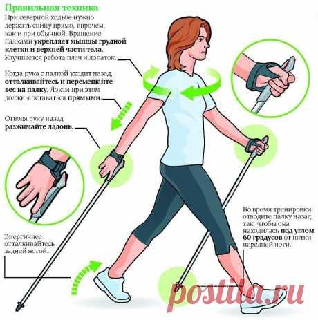 Польза и техника скандинавской ходьбы. Как правильно подобрать палки | Полезные советы