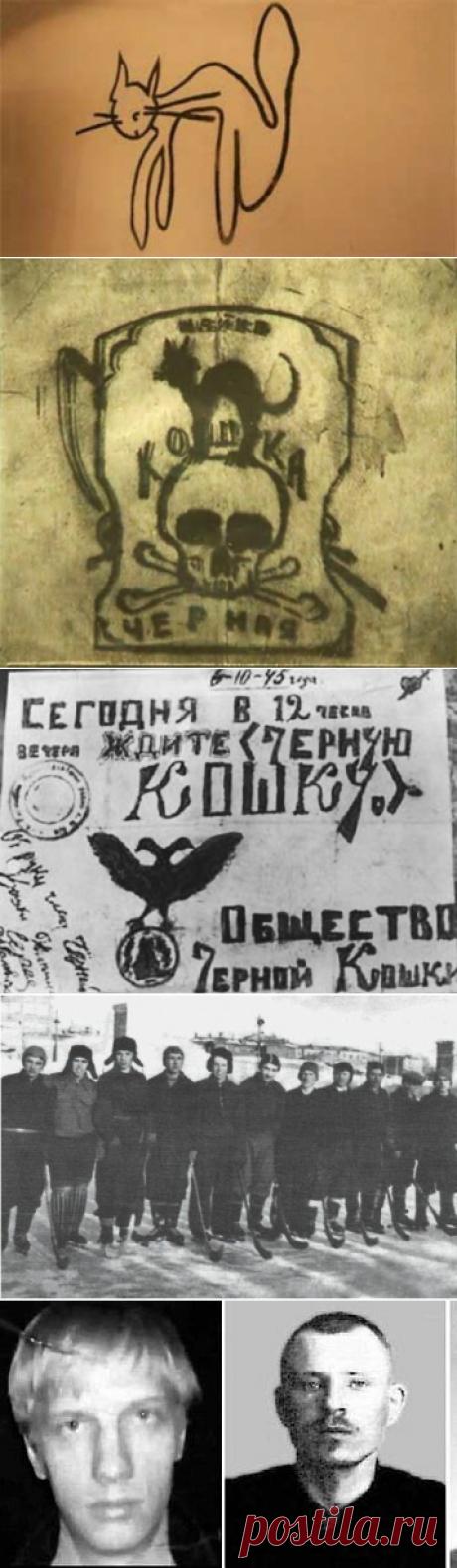 Засекреченная «Черная кошка»: почему дело самой таинственной банды послевоенного времени было под грифом «Секретно» | Знаете ли вы, что... | Яндекс Дзен