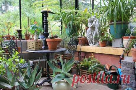 7 удобрений для комнатных растений, о которых вы не знали / Домоседы