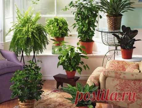 Как правильно ухаживать за комнатными растениями в осенне-зимний период?