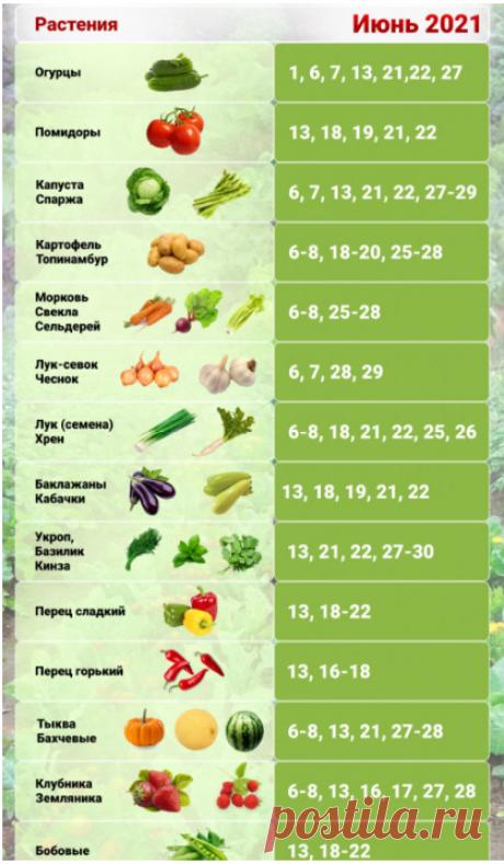 Что ещё можно посеять до 10 июня и получить полноценный урожай + Посевной календарь на июнь 2021   Дачная задача   Яндекс Дзен