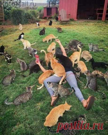 Кошачье царство