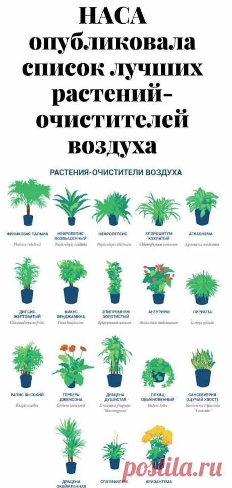 НАСА опубликовала список лучших растений-очистителей воздуха