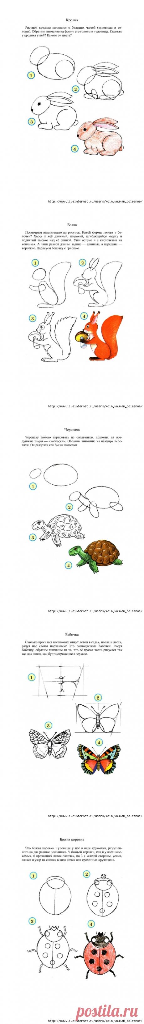 Рисуем животных, птиц, насекомых, рыб поэтапно