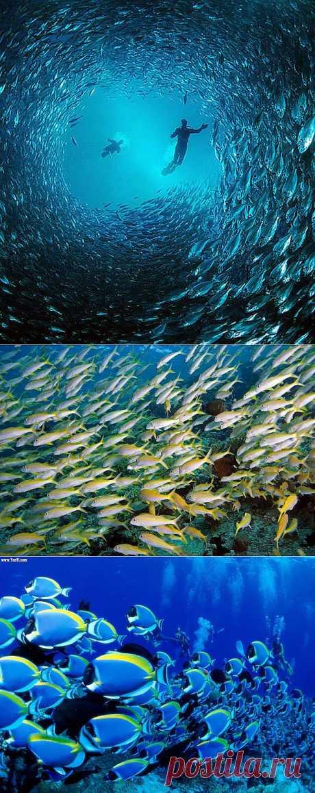 11 фотографий завораживающих стаи рыб   Живой фотоблог