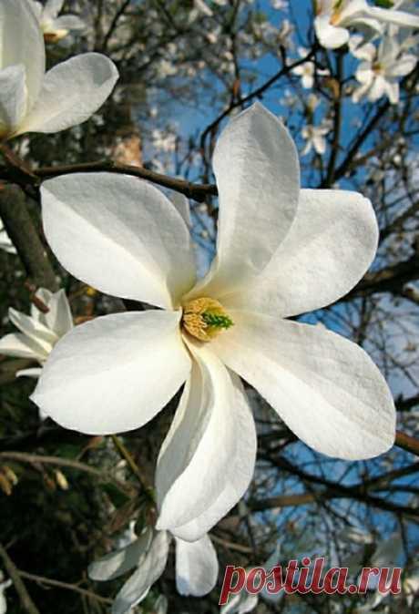 """.... Ах, весна, не жалей нам своuх аромаmов, Подарu нам цвеmущuх буmонов """"Шанель"""", Мы усталu оm веmра, от сmуж, снегоnадов И вкушаем цвеmущей весны карамель...  © Елена Шmоль"""