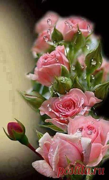 ..роза.