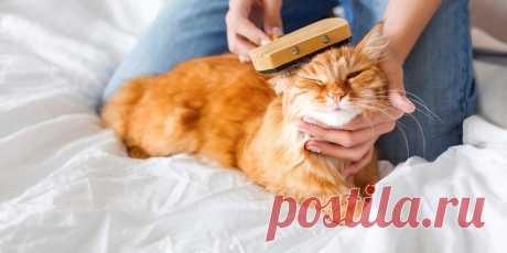 Как вывести блох у кота в домашних условиях | На всякий случай