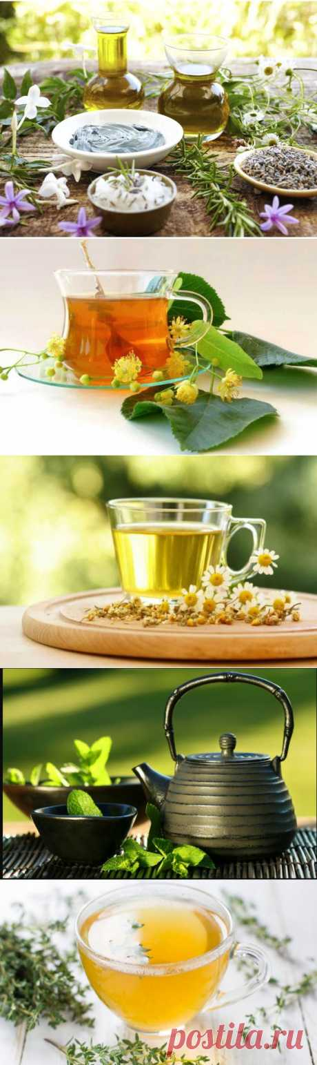 Травы и цветы, которые можно заваривать в чай.