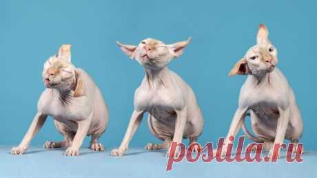 Профессиональные фотографии кошек