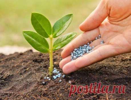 12 удобрений для сада почти даром!
