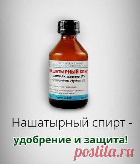 Нашатырный спирт - удобрение и защита!
