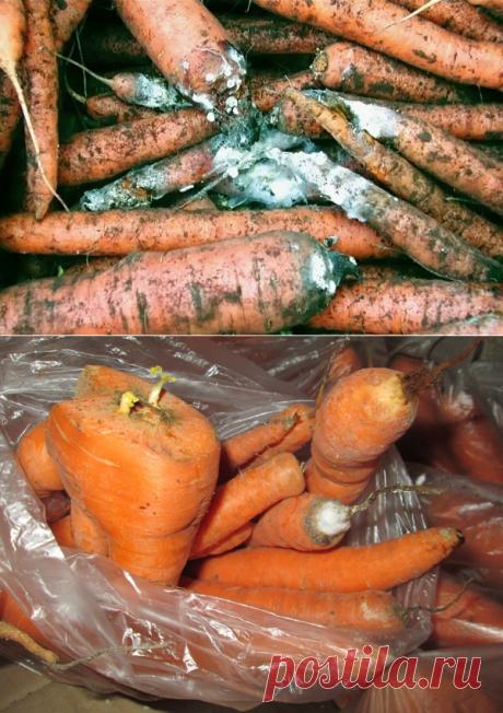 Зря послушала маму: ее способ хранения моркови уничтожил весь Мой урожай | Садовый рай 🌱 | Яндекс Дзен