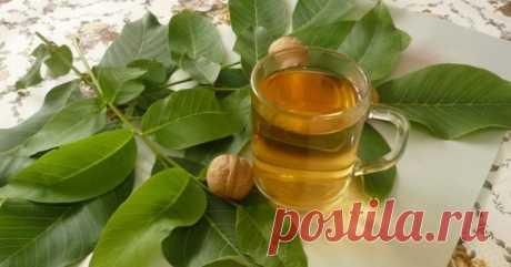 Полезные свойства листьев грецкого ореха / Будьте здоровы
