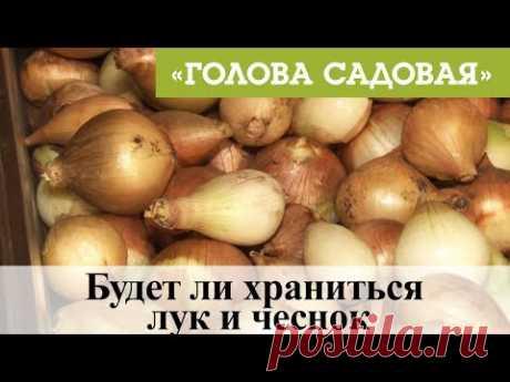 Голова садовая - ВАЖНО! Будет ли храниться лук и чеснок