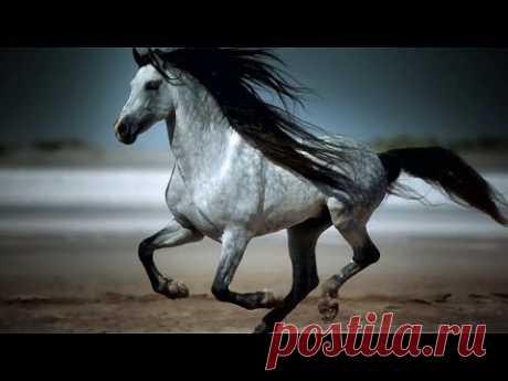 ▶ Amazing Galloping Horses 1080p HD - YouTube
