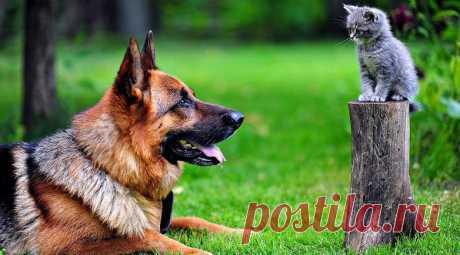Самые умные породы собак / Питомцы