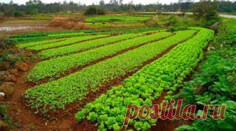 Растения сидераты для огорода: какие бывают, польза для почвы, как правильно использовать на дачном участке Какие растения сидераты подходят для улучшения почвы и борьбы с сорняками на садовом участке