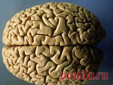 Сохранить здоровье мозга помогают продукты с витамином B12   ЗОЖ   MedikForum.ru
