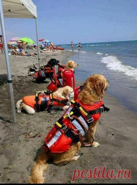 Спасатели настороже