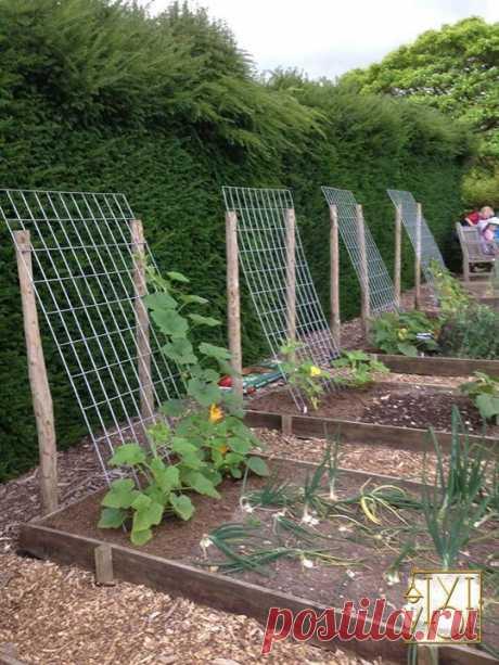 Идея для выращивания огурцов, тыкв и кабачков. Готовы к дачному сезону?