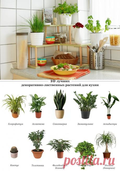 Растения для кухни   Flohouse