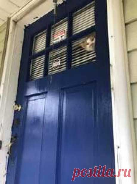 Cat Gets Mad When Mom Won't Let Him Outside - The Dodo