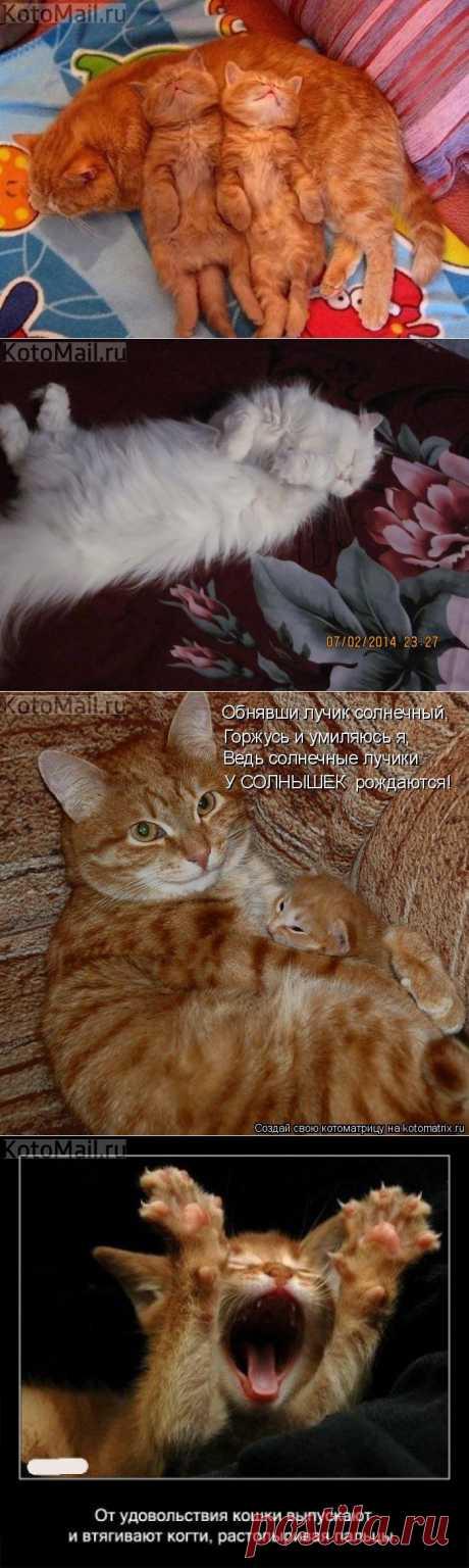 Мама как диван | KotoMail.ru