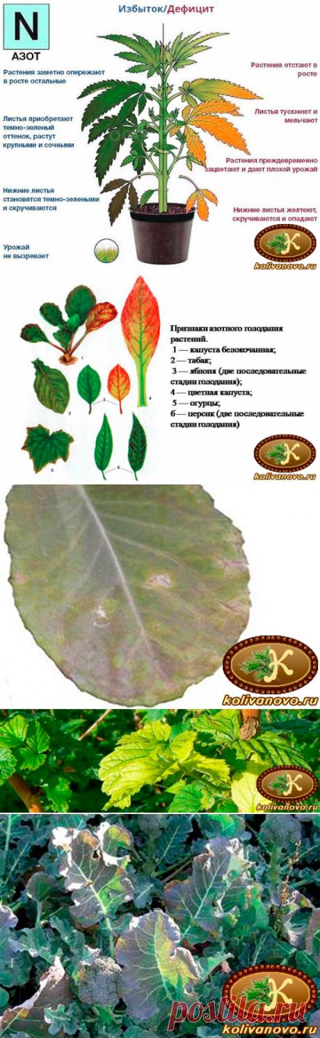 Какие признаки азотного голодания у растений