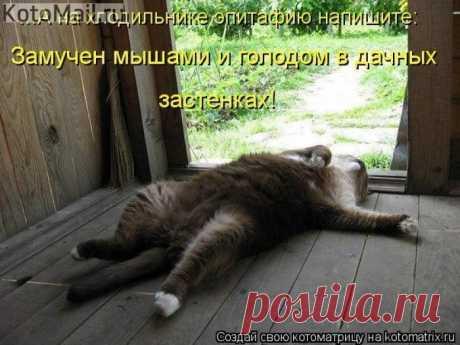 Уютно, комфортно и доступно   KotoMail.ru