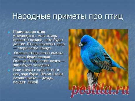 Птичьи приметы: Жаворонок летит к теплу, зяблик – к стуже.