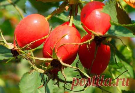 Садовые работы в августе: календарь садовода-огородника работы на участке и на винограднике