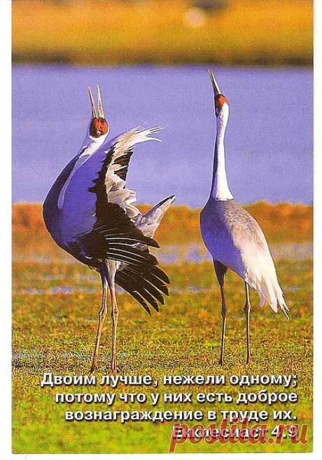 А. Герцен:Природа не знает остановки в своем движении и казнит всякую бездеятельность.