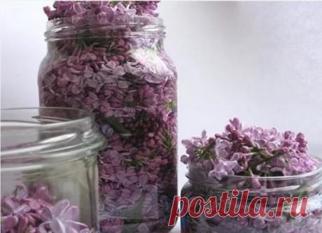 ЗАПОЛНИТЕ БАНКУ РАСТИТЕЛЬНЫМ МАСЛОМ И ФИОЛЕТОВЫМИ ЦВЕТКАМИ  Захватывающий волшебный аромат сирени невозможно забыть! Нежный и сладкий запах цветущих весенних садов наполняет нас приятными ощущениями. Но не каждый знает о лекарственных свойствах некоторых цветов. Вот, к примеру, обычная сирень. А ведь она способна помочь организму справиться со многими заболеваниями. Цвет сирени  Лечебные свойства сирени известны в народной медицине не одну сотню лет. Она в изобилии росла в...