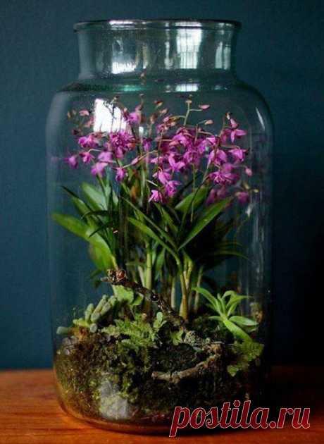 Маленькие миры в стеклянной посуде: идеи — DIYIdeas