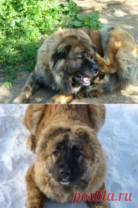 Собака злая цепь китайская. | Своих не едим. | Яндекс Дзен