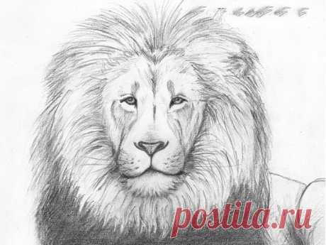 Рисуем льва