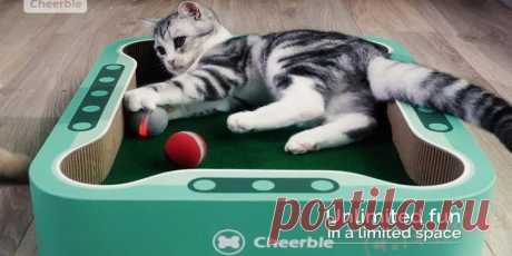 Создана умный мячик игрушка для котов - Cheerble Ball