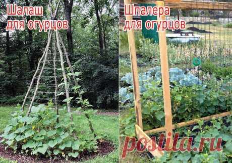 Мой особый способ выращивания огурцов