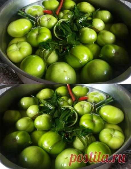 Квашеные зеленые помидоры в кастрюле как бочковые: рецепт пальчики оближешь | Блоггерство на пенсии | Яндекс Дзен