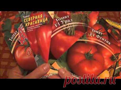 Любимые сорта. Баклажаны, огурцы, томаты (запрос) - YouTube