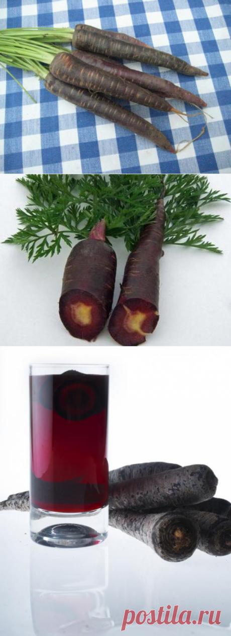 Черная морковь: виды, польза. Сок черной моркови :: SYL.ru