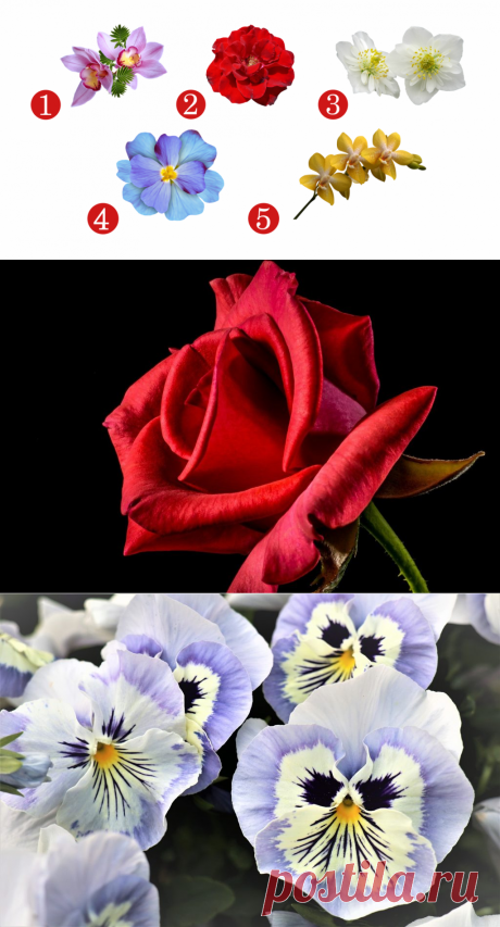 Выбранный цветок расскажет о силе вашего характера - 5 Июля 2020 - Дискотека