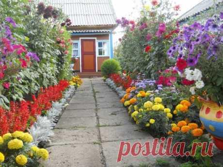 Цветники на даче - буйство ярких красок