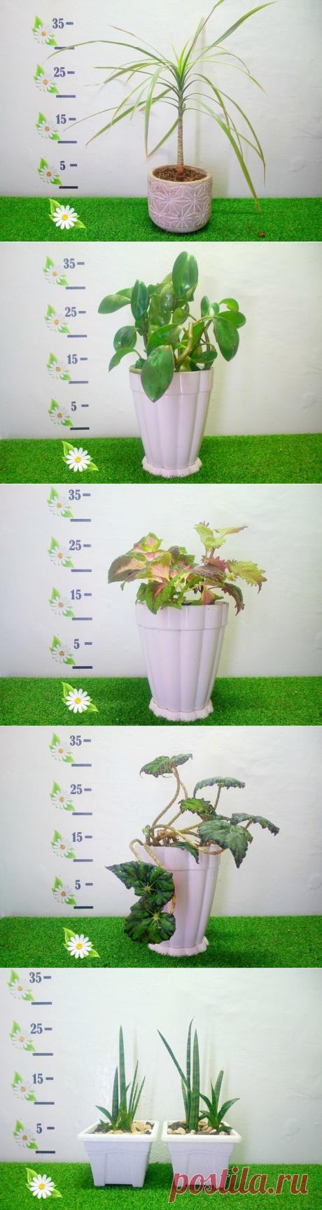 Лана Влади. Комнатные растения